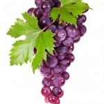 Panorama da produção de uvas e vinhos no Brasil