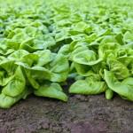 Ácidos húmicos –Mais umidade para o solo