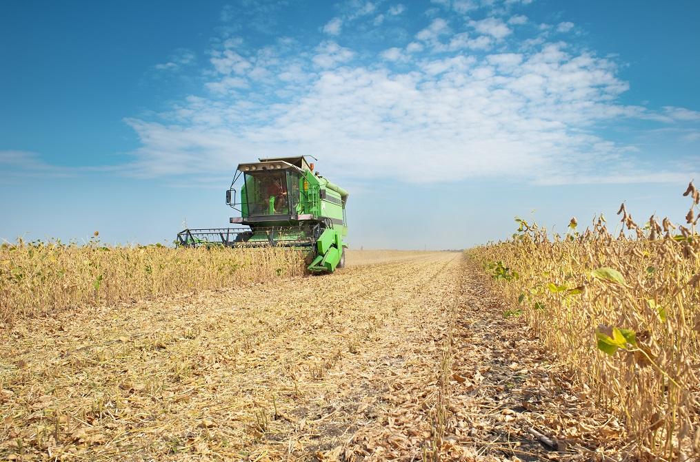 A estimativa de área plantada de soja é crescente em quase todos os Estados produtores - Créditos Shutterstock