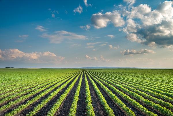 As novidades na calagem devem trazer benefícios em qualidade e produtividade agrícolas - Crédito Shutter