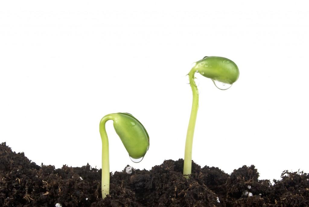 Solo corrigido corretamente, a planta se desenvolve melhor - Crédito Shutterstock