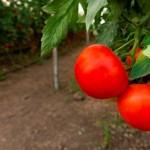 Acadian Plant Health –Otimizando a saúde das plantas cultivadas