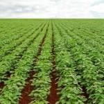 Eficiência do cloreto de potássio para a resistência das plantas