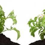 Acúmulo de nutrientes no solo em função da aplicação de fertilizantes organominerais