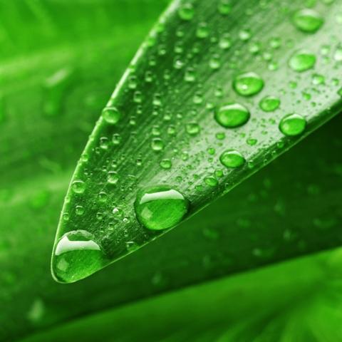 Perdas por escorrimento podem ser evitadas com os adjuvantes - Fotos Shutterstock