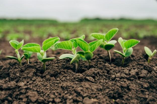 A análise de solo é a principal ferramenta de avaliação da fertilidade do perfil - CréditoShutterstock