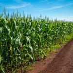 Fertilizantes de liberação lenta –Quando utilizar essa tecnologia?