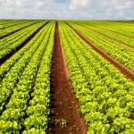 Fertilizante com ação bioestimulante é nova estratégia em HF