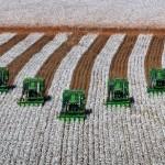 Qualidade da fibra de algodão –O diferencial que agrega valor
