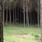 A qualidade da madeira, a demanda do cliente e o manejo florestal