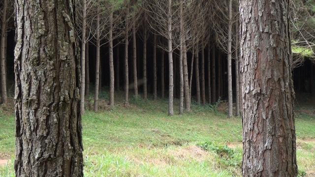 Crédito Painel Florestal
