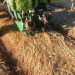 Sistema de plantio direto em alface crespa