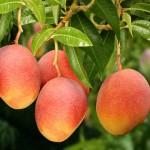 Atuação dos aminoácidos em frutas e hortaliças
