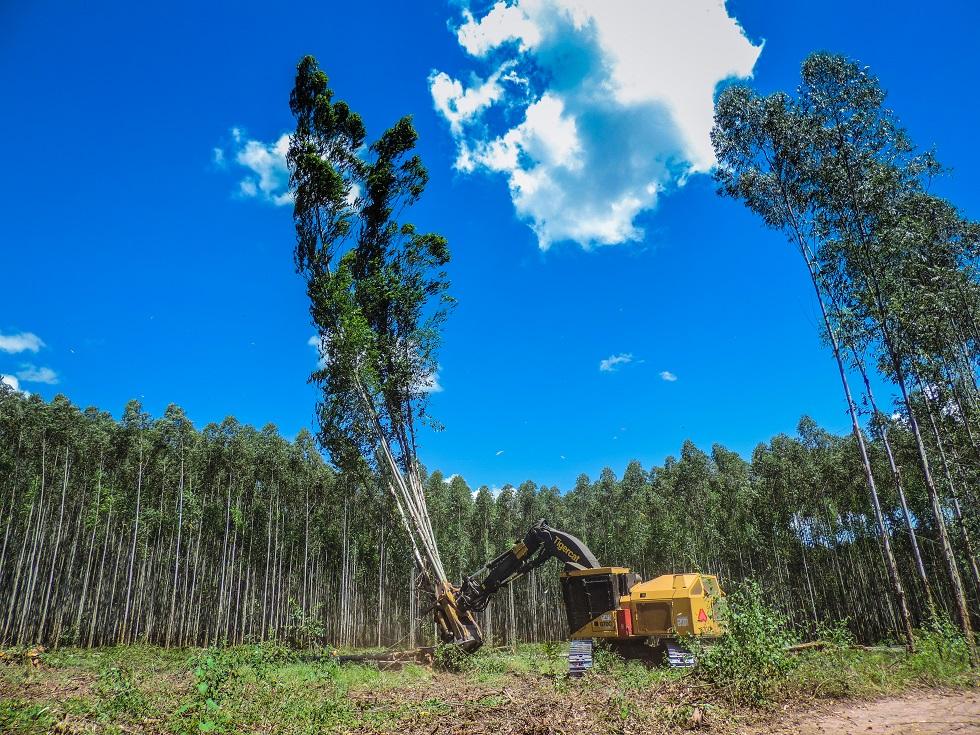 Depois de cortada e processada, entram em ação as máquinas florestais do tipo Forwarder - Crédito Ponsse