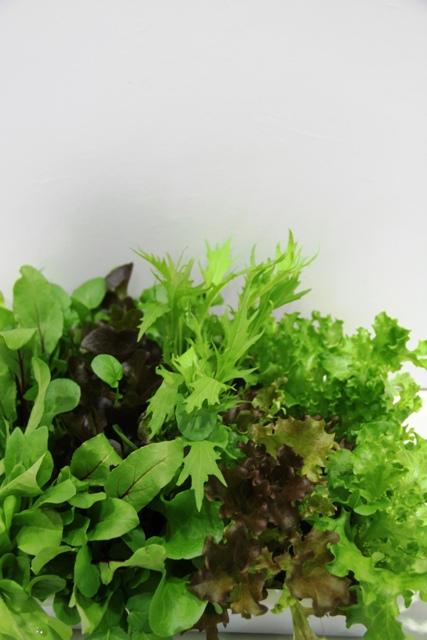 As hortaliças baby leaf atende famílias menores - Crédito Ana Maria Diniz