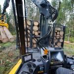 O que você precisa saber antes de colher sua floresta