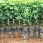 Plantar São João –Especialista em sacos para mudas