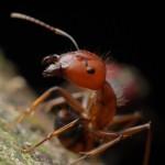 Formigas sob controle