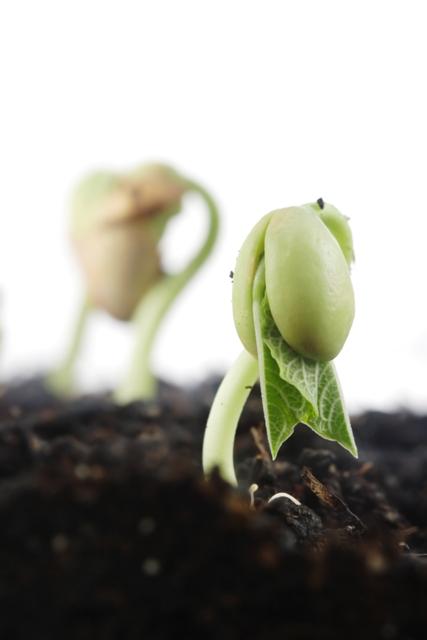 O calcário neutraliza a acidez do solo e melhora o desenvolvimento das plantas - Crédito Shutterstock