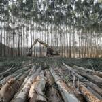 Análise da proposição do manejo florestal voltado aos objetivos da produção