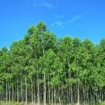 Fertilização Florestal será discutida em Minas