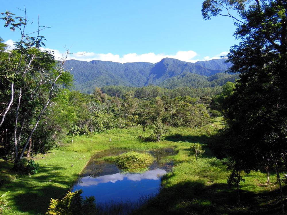 Fotos Instituto Florestal