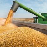 Preço do milho sobe e promete ser boa opção nesta safra