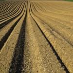 Análise de solo –Essencial para calagem ou adubação
