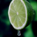 Algas melhoram o teor de ºBrix do limão