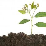 Métodos de produção de mudas de eucalipto