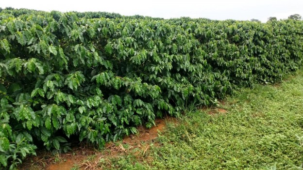 Créditos Vitória Fertilizantes