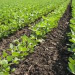 Ácidos húmicos otimizam o enraizamento das plantas