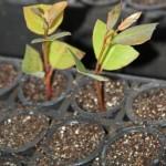 A viabilidade da genética para as florestas