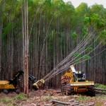 A evolução da colheita florestal