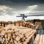 É possível promover a melhoria da madeira somente com manejo florestal?
