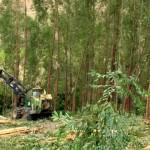 Mecanização e automação na silvicultura