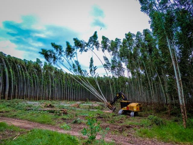 Uma área de 200 hectares com árvores de eucalipto está reservada para a realização o evento - Créditos Divulgação Expoforest Valterci Santos