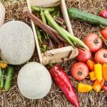 Isla Sementes reúne influenciadores e chefs em encontro que estimula alimentação saudável