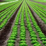 Aplicação de ácidos fúlvicos e húmicos em folhosas