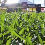 Demonstrações em plots agrícolas são atrações da TECNOSHOW COMIGO