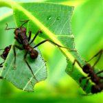 Formigas – Dê um basta nelas