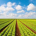 Organominerais fornecem matéria orgânica para o solo