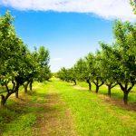 Cálcio proporciona bom desenvolvimento do citros
