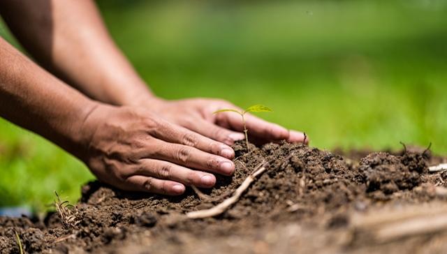 A análise de solo faz parte do planejamento do plantio agrícola - Crédito Shutterstock