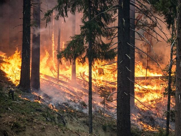 Após a ocorrência de um incêndio, o valor comercial do material lenhoso desvaloriza - Crédito Pixabay