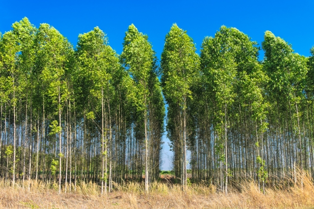 As tecnologias de fertilizantes de liberação lenta ou controlada e de fertilizantes estabilizados têm sido usadas há muito tempo - Crédito Shutterstock