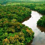Árvore madeireira amazônica pode fixar nitrogênio no solo