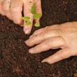 Fertilizantes organominerais granulados na produção de mudas de espécies florestais