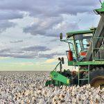 Iniciada a colheita da safra 2017/2018 de algodão na Bahia