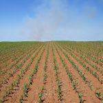 O que a análise de solo pode fazer pela sua lavoura